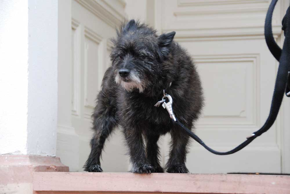 Pepe der Hund vom Lindenberg