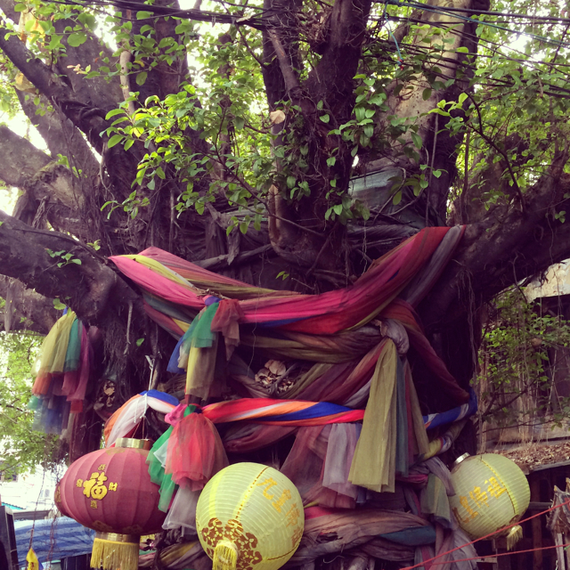 Bangkok heiliger Baum